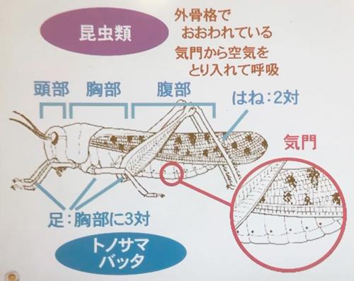 プロジェクタを使った授業のイメージ